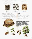 Енциклопедія дошкільника. Ліс. Книга Каспарової Юлії, фото 2
