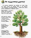 Енциклопедія дошкільника. Ліс. Книга Каспарової Юлії, фото 3