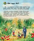 Енциклопедія дошкільника. Ліс. Книга Каспарової Юлії, фото 6