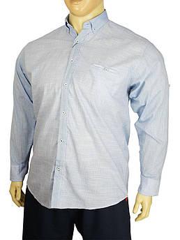 Однотонна чоловіча сорочка Barcotti A: 0168-01 в великому розмірі