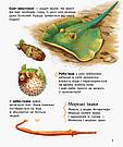 Енциклопедія дошкільника. Океани та моря. Юлія Каспарова, фото 5