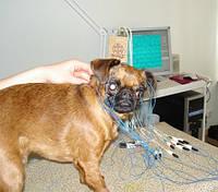 Компьютерный анализ электроэнцефалограмм у собак
