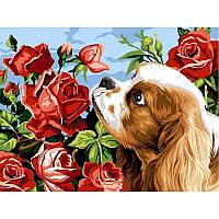 Картина по номерам Коккер спаниель и розы 30Х40см Babylon VK106