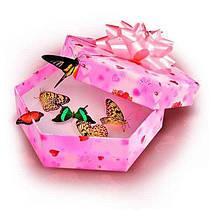 Выбрать упаковку для живых бабочек