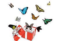 Салют из 10 живых тропических бабочек