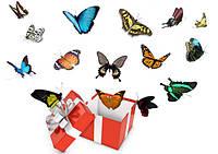 Салют из 15 живых тропических бабочек