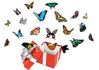Салют из 20 живых тропических бабочек