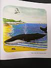 The Snail and the Whale. Julia Donaldson and Axel Scheffler/ Равлик і кит. Джулія Дональдсон і Аксель Шеффлер., фото 8