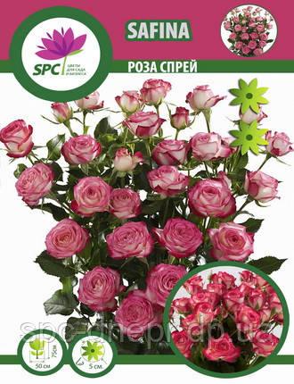 Роза бордюрная, спрей Safina, фото 2