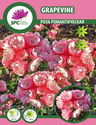 Роза романтическая Grapevine, фото 2