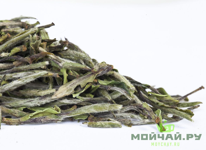 Бай Му Дань (дикорастущий), белый чай