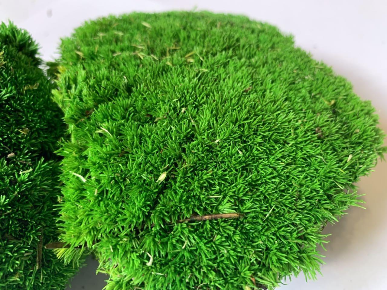 Декоративный стабилизированный мох кочковой