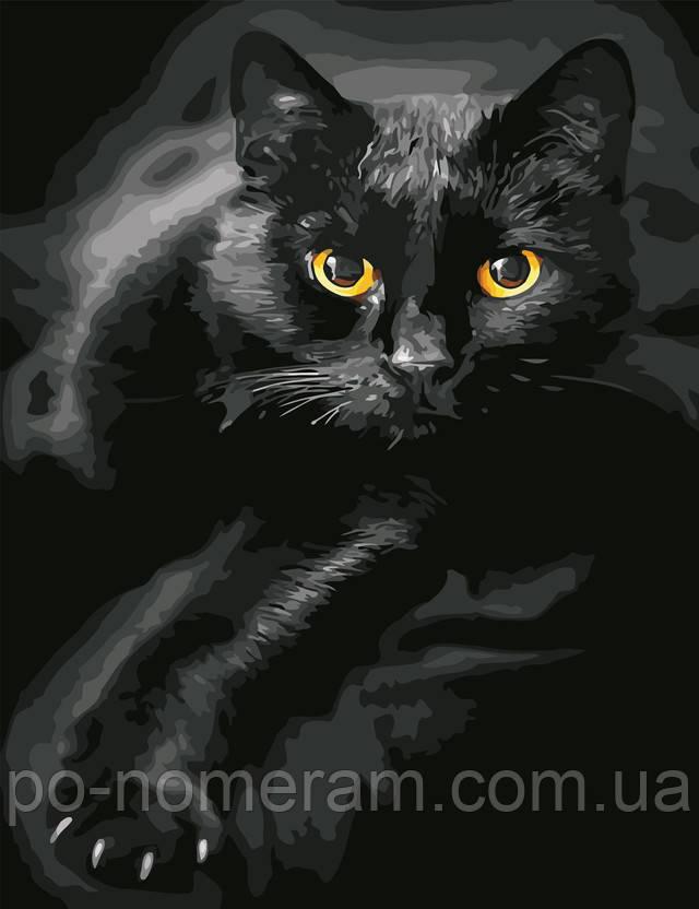 Картина по номерам Черный кот
