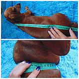 Одежда для маленькой собаки ручной работы,свитер для таксы,свитер для собаки, фото 10