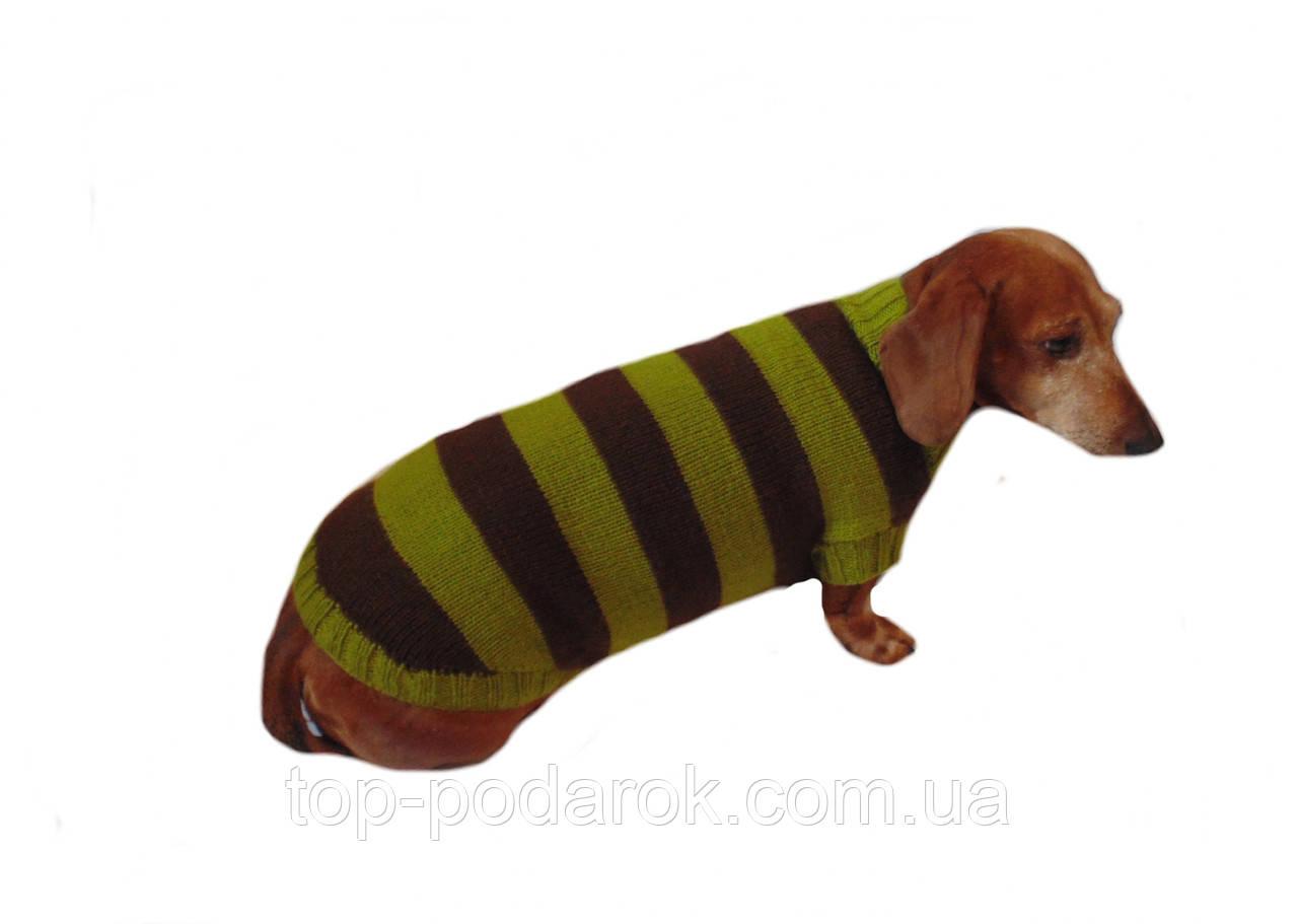 Одежда для таксы ручной работы,свитер для таксы,свитер для собаки