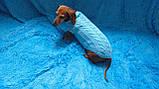 Вязанная одежда для собаки,свитер для таксы,свитер для собаки,теплая одежда для собаки, фото 2
