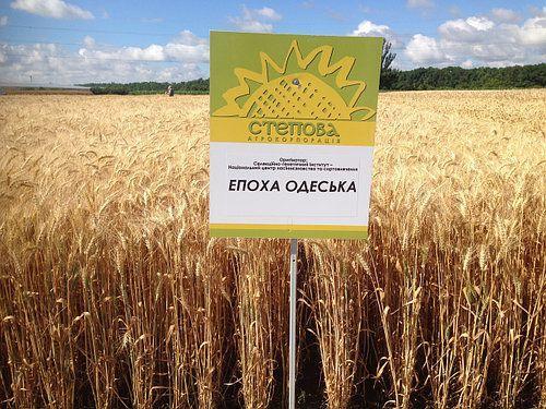 Насіння пшениці озимої Епоха Одеська (еліта) Original 2019