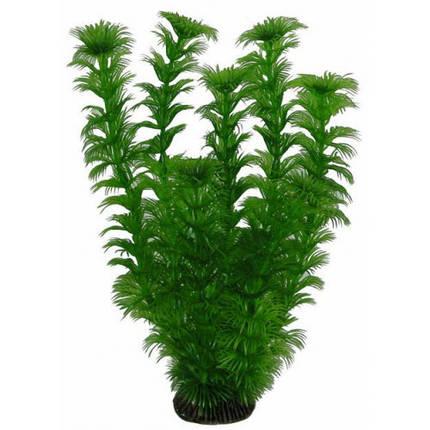 Aquatic Plants  Аквариумное Растение, 25 См Х 8 Шт/уп. Арт.2566, фото 2