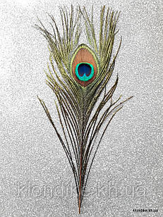 Перья павлина декоративные, 24-26 см
