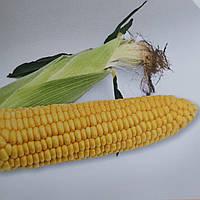Кукуруза Старшайн F1 Syngenta 50000 семян