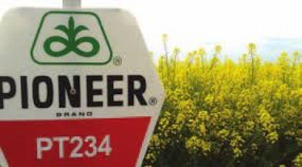 Насіння озимого ріпаку PT234 Pioneer | ПТ234 Піонер®