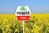 Насіння озимого ріпаку PT248 Pioneer | ПТ248 Піонер®