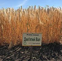 Семена озимого ячменя Девятый вал (дворучка)