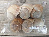 Лесные ракушки улитки, диам. 4 см., 6 шт., 20 гр.
