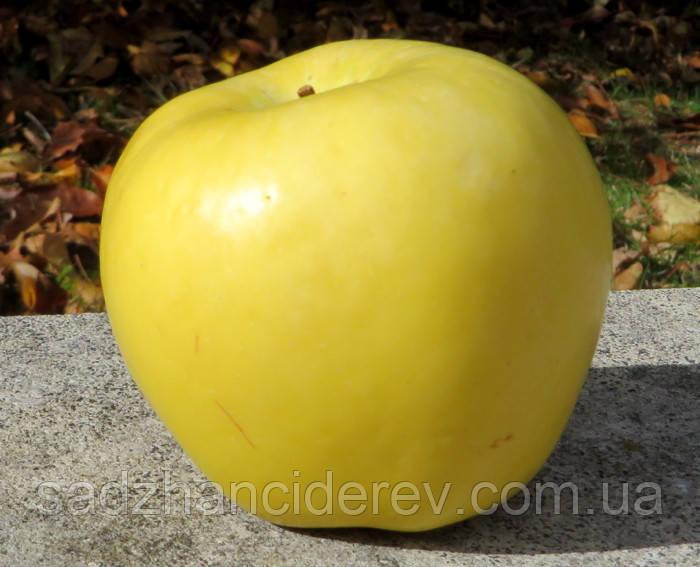 Саджанці яблунь Мутсу (Mutsu, Муцу)
