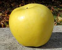 Саджанці яблунь Мутсу (Mutsu, Муцу), фото 1