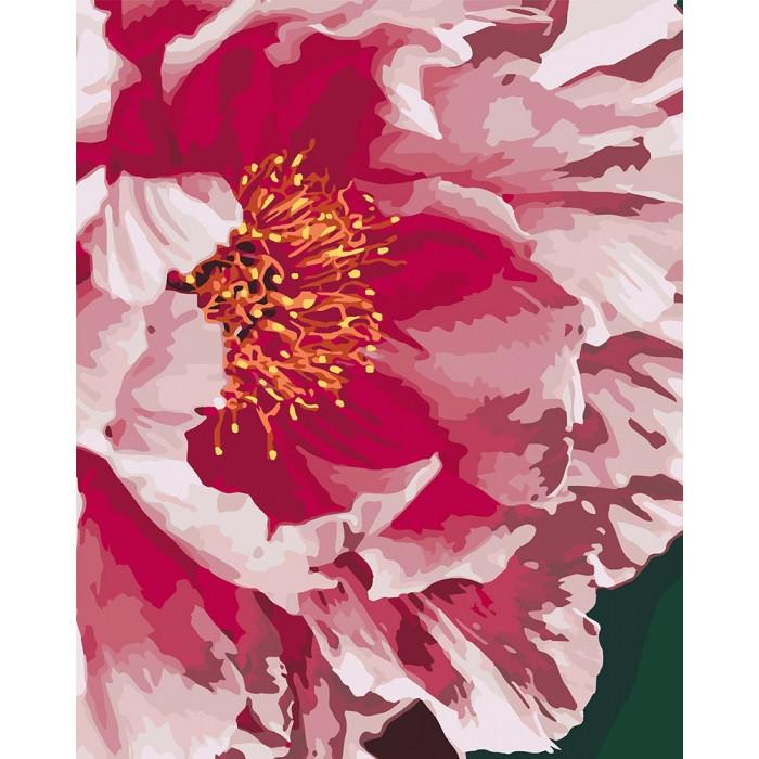 Картина-раскраска по номерам Пион KHO3039 Идейка 40 х 50 см (без коробки)