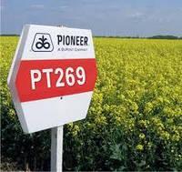 Насіння озимого ріпаку PT269 Pioneer | ПТ269 Піонер®
