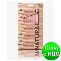 "Карандаши цветные ""MARCO"" Natural (12 цветов)"