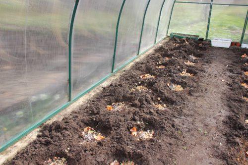 Использования органических удобрений для выращивания рассады томатов