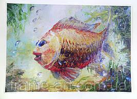 Постер Рыбка 30х40см