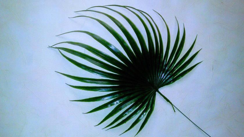 Пластиковый лист пальмы, фото 2