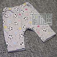 Демисезонные весна осень р 68 3-5 мес модные детские штанишки для новорожденных малышей ИНТЕРЛОК 4794 Серый, фото 1