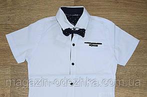 Рубашка школьная оптом рост 134-170, фото 2