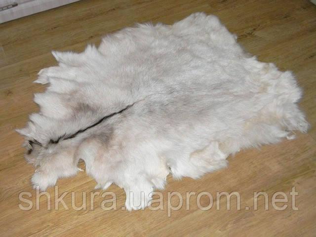Шкура козы, фото 1