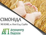 Семена пшеницы СИМОНИДА (NS SEME, г. Нови Сад, Сербия) Элита