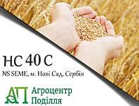 Семена пшеницы НС 40 С (NS SEME, г. Нови Сад, Сербия) Элита