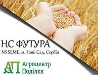 Семена пшеницы НС ФУТУРА (NS SEME, г. Нови Сад, Сербия) Элита