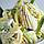 "Натуральная паста со вкусом ананаса ""Joypaste Pineapple / Ananas"", Италия (фасовка 1,2 кг), фото 2"