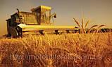 Кормоизмельчитель ДТЗ КР-23 для измельчения зерна, качанов кукурузы, овощей, стеблей, фруктов. Мощн. 2,8 кВт., фото 4