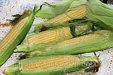 Кормоизмельчитель ДТЗ КР-23 для измельчения зерна, качанов кукурузы, овощей, стеблей, фруктов. Мощн. 2,8 кВт., фото 5