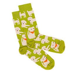 Модные носки  мужские Dodo Socks Brovko 42-43, Желтые