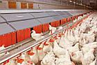 Решетчатый настил для птичников 1000х600 мм, пластиковый пол для птичников, фото 3