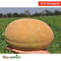 Дыня Ананасного типа гибрид F1 средний вес 2-3 кг, Семена профессиональная упаковка 1000 семян, Clause