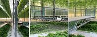 Автоматичні платформи допомагають вирощувати розсаду суниці