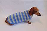Вязанная теплая одежда для собаки,свитер для таксы,свитер для собаки,теплая одежда для собаки, фото 4